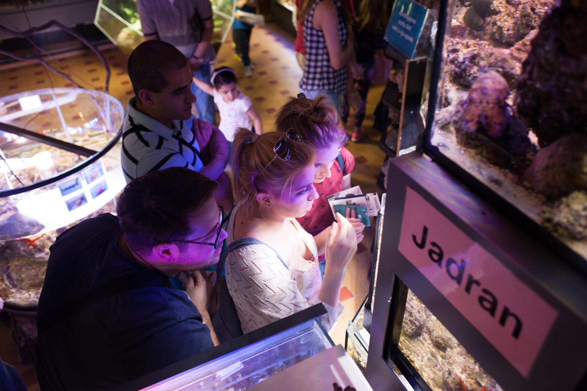 Javni akvarijum i tropikarijum NM2016 014